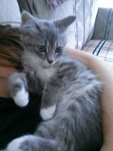 One female kitten in Fort Campbell, Kentucky