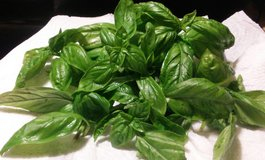 Garden Fresh Sweet Basil in Cherry Point, North Carolina