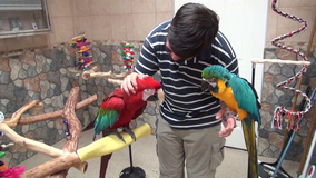 Macaw Parrots For Rehoming in Stuttgart, GE