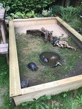 Terrapin,Turtle and Tortoise Rehoming in Lakenheath, UK