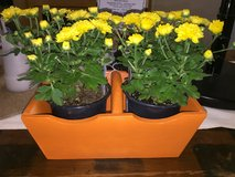 Wooden boxes w/fresh mums in Bartlett, Illinois