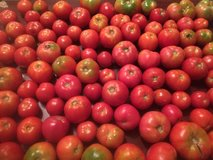 Home-Grown Tomatoes in Clarksville, Tennessee
