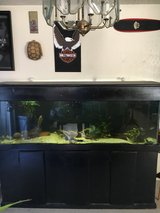 125 gallon fish tank with a 30 gallon sump Stand and canopy Canister filter Some extra stuff   3... in 29 Palms, California
