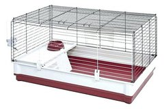 ISO Guinea pig cage in Lawton, Oklahoma