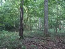 Searching for Hunting Land Close to Perry 10 - 40 Acres in Perry, Georgia