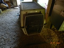 Dog carrier in Coldspring, Texas