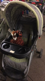Stroller - Green and Tan in Fort Leonard Wood, Missouri