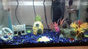 10g fish tank with fish in Fort Polk, Louisiana