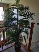 6ft potted silk palm tree in Joliet, Illinois