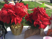 Red poinsettia flowers in Bolingbrook, Illinois