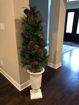 Tree in white urn in Kingwood, Texas