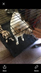 Urgent! Foster Needed ASAP! Pyrenees, Life or Death issue. Rescue will cover all expenses. in DeRidder, Louisiana