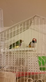 PAIR LADY GOULDIANS CAGE AND NEST in Camp Pendleton, California