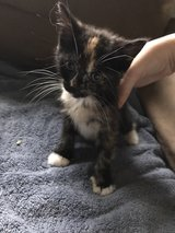 two kittens looking for a home! in Camp Lejeune, North Carolina