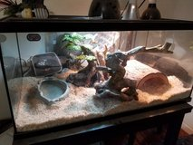 Free Ball python in Vacaville, California