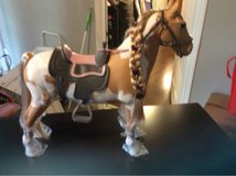 American Doll Horse in Fort Campbell, Kentucky