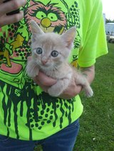 kitten for adoption in Wilmington, North Carolina