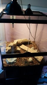 red bearded dragon in Great Lakes, Illinois