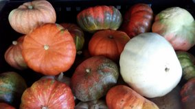 Pumpkin Sale in Pleasant View, Tennessee