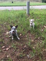 Need Foster for 2 puppies ASAP in DeRidder, Louisiana