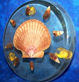 Vintage 1970s Large Acrylic with Real Seashells Trivet in Alamogordo, New Mexico