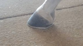 Elite farrier service in Las Cruces, New Mexico
