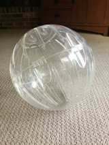 Large exercise ball for guinea pigs, rats, hamsters, etc in Aurora, Illinois