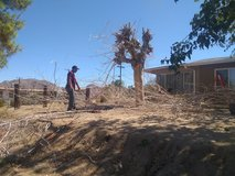 Offering Hauling Services, Tree Cutting, Debris Removal, Shrub Trim in 29 Palms, California