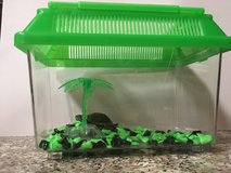 Turtles FPR PETS! in Yucca Valley, California