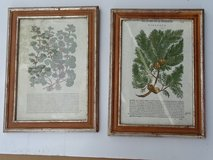 2 old prints in wooden frames - very pretty in Ramstein, Germany