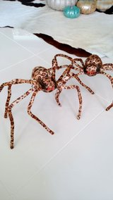 2 Halloween Spiders in Okinawa, Japan