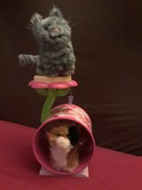 American Girl Cat Tower in Spring, Texas