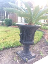 Pr of 5'+ Indoor/Outdoor Huge Planters w/lg SAGO PALMS! Evergreen/Hardy Plants in Sugar Land, Texas
