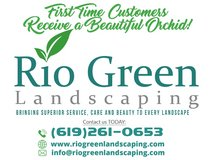 First time customers receive a beautiful orchid in Bellaire, Texas