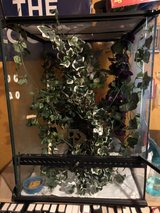 Crested Gecko and more! in Fort Polk, Louisiana