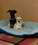 2 very well behaved dogs in Alamogordo, New Mexico
