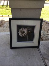 Black Daisy picture in Kingwood, Texas