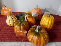 Gourds and Pumpkins in Joliet, Illinois