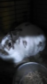 I have two female rabbits in Fort Polk, Louisiana