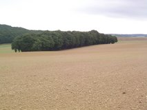 Woods / Land in Ramstein, Germany