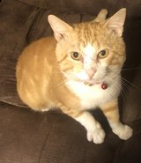 Free male cat to good home in Fort Polk, Louisiana