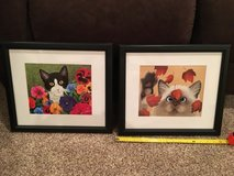 cute cat pictures! in St. Charles, Illinois