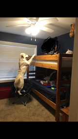Bunk bed in Fort Campbell, Kentucky