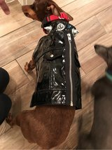 dog costume - biker jacket / punk rocker in Spring, Texas