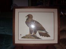ray harm - eagle picture in Elizabethtown, Kentucky