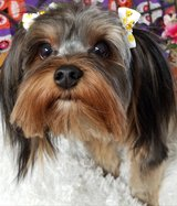 Dog Grooming Services in Fort Leonard Wood, Missouri