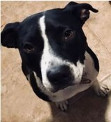 Dogs need a good home in Kingwood, Texas