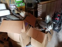 Duck decoys in Lawton, Oklahoma