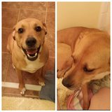 Dog needs new home!! in Fort Benning, Georgia