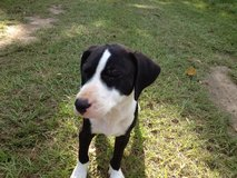 FREE Puppies and 1 female dog in DeRidder, Louisiana